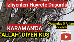 Karaman'da Ağaç Dalında Defalarca 'ALLAH' Diyen Kuş...